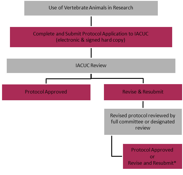 IACUC Review Process